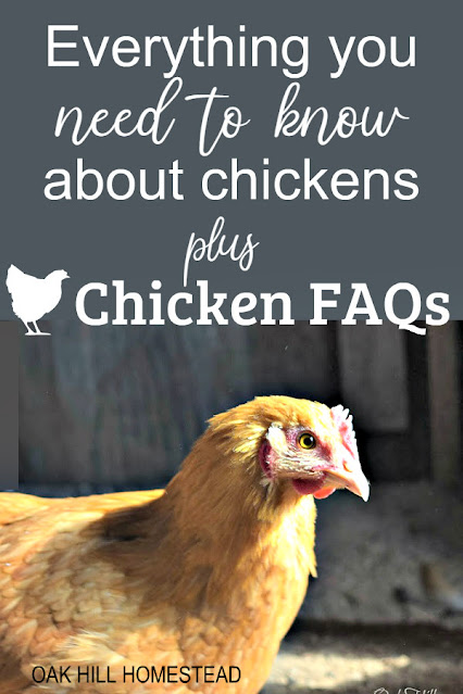 What you need to know about raising chickens - is it right for you?
