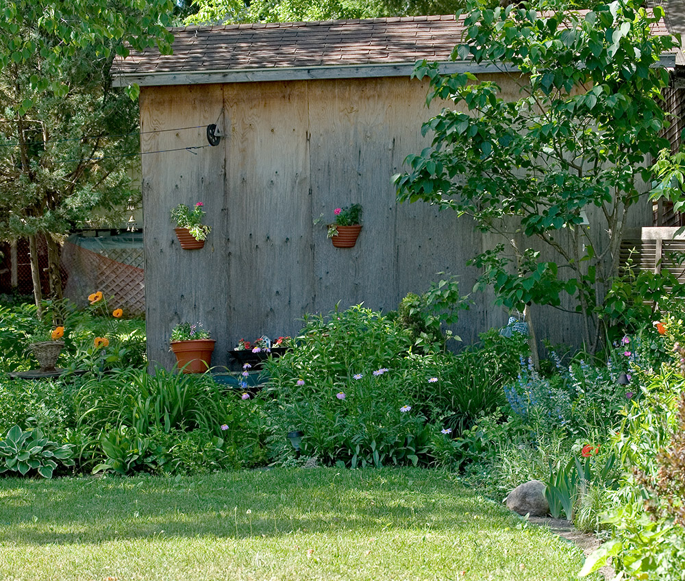 An unpainted wood shed with a border garden, and wild bushy natural garden.