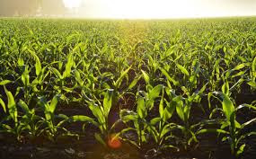 Sustainable agriculture problems and its impact on agriculture