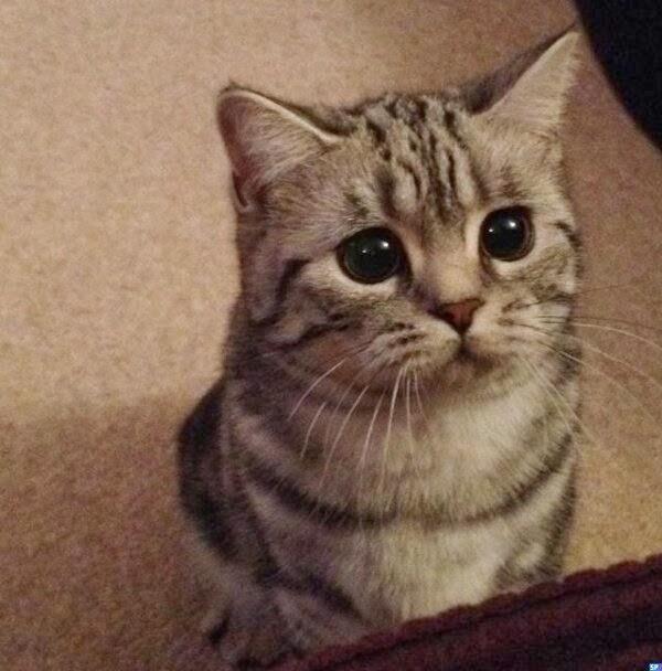 Funny Cats: Funny Cats - Part 97 (40 Pics + 10 Gifs)