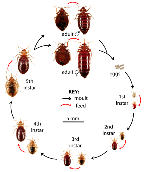 How To Get Rid Of Bed Bugs Naturally