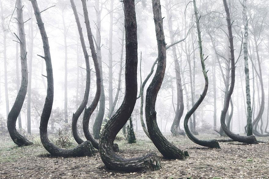 omorfos-kosmos.gr - Δείτε το μυστηριώδες δάσος της Πολωνίας με τα 400 στραβά δέντρα (Εικόνες)
