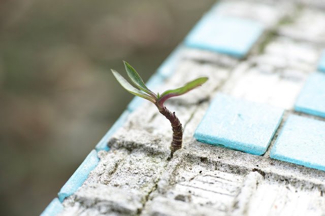green leafed plant budding in between concrete