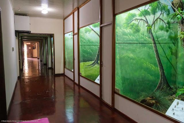 Museu de História Natural Capão da Imbuia - MHNCI - corredor principal