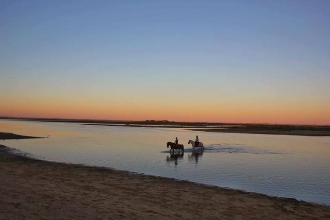 Paseos a caballo por la Ría Formosa