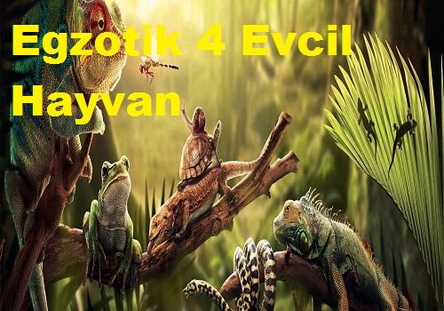 Egzotik 4 Evcil Hayvan