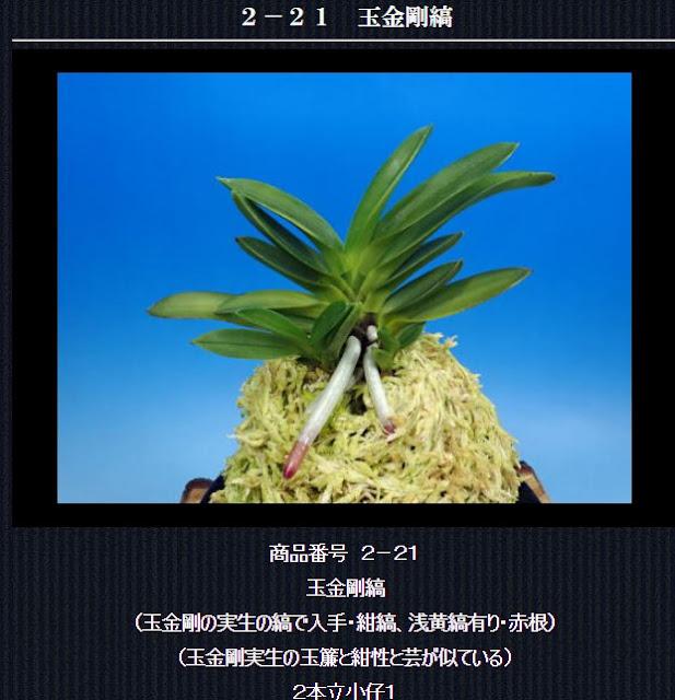 http://www.fuuran.jp/2-21.html