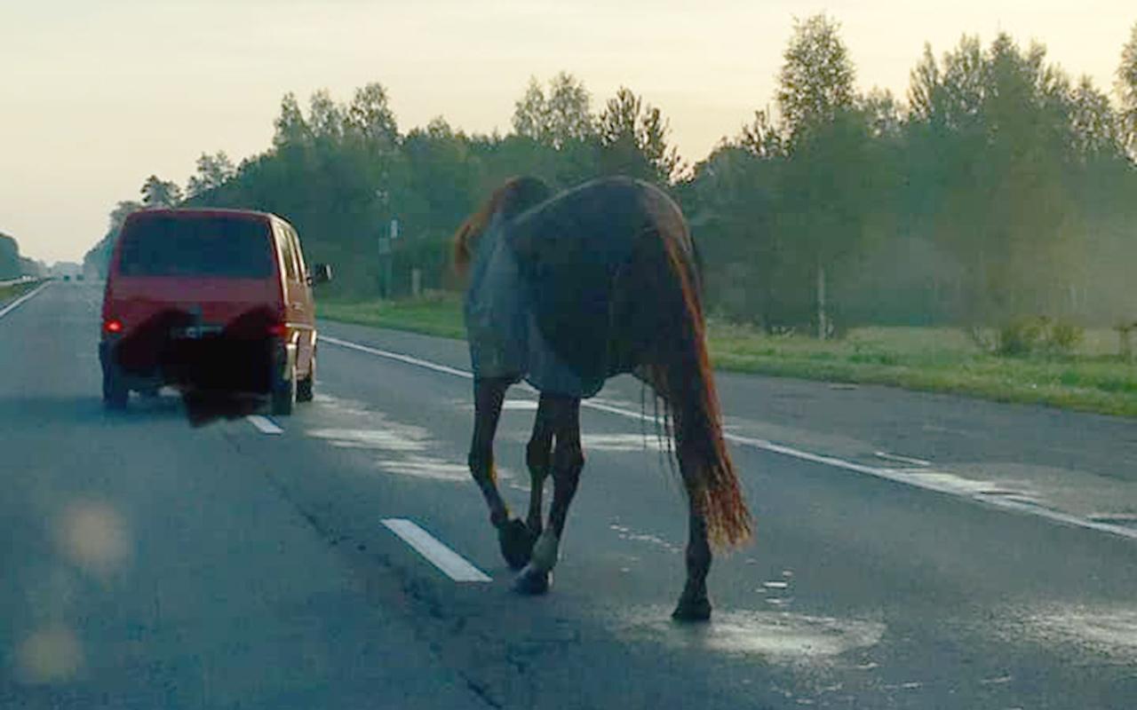 Zirgs pastaigājās pa Jelgavas šoseju