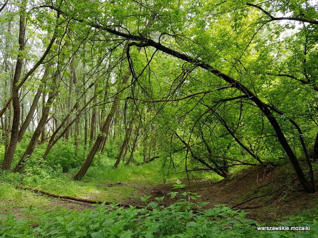 Warszawa Warsaw Bielany Młociny teren zielony parki drzewa las kanał