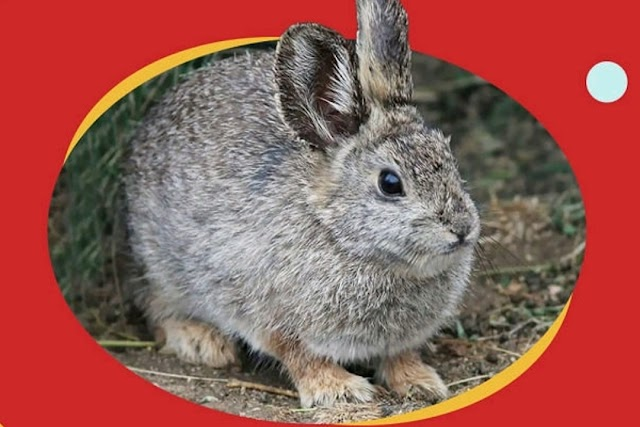 विश्व के सबसे छोटे जानवर World's smallest animals