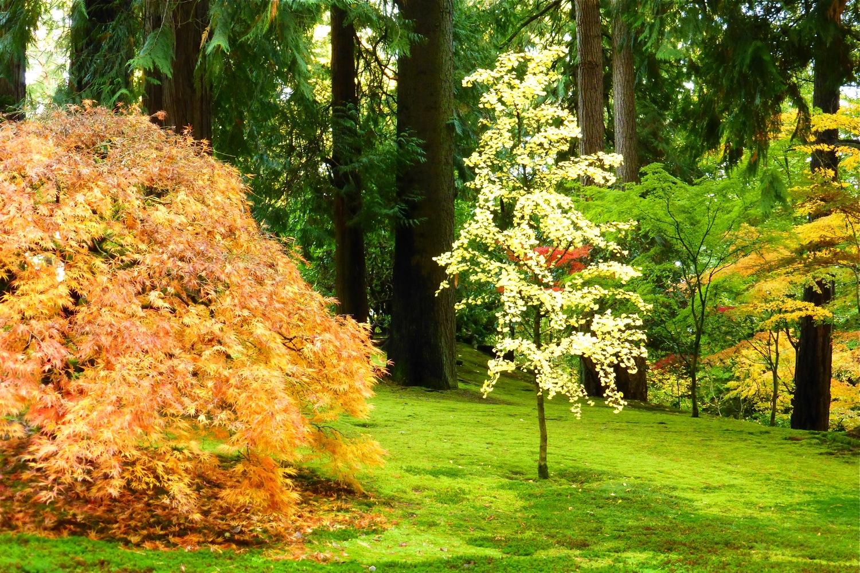 autumnal scene Portland Japanese Garden