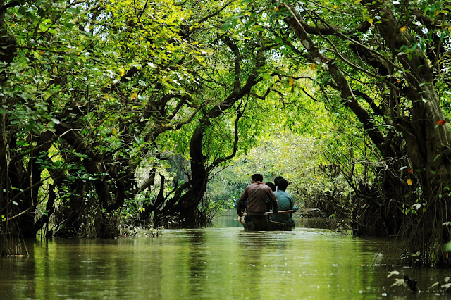 Ratargul swamp forest is look like a part of  Amazon at Gowainghat  in Bangladesh
