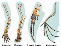 Pendalaman Materi Teori Evolusi, Petunjuk-Petunjuk Adanya Evolusi