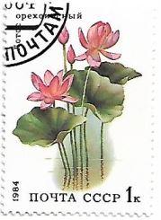Selo Flor de lótus
