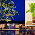 This private resort in Valladolid is worth the trip to every plantitas!