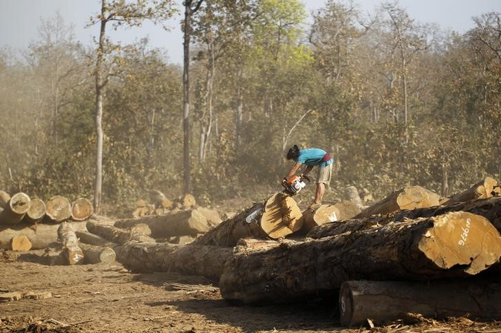 Desflorestação em Myanmar