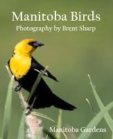 http://www.manitobagardens.com/2016/10/manitoba-birds.html