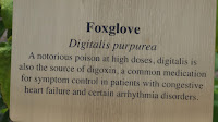 Foxglove properties, Medicine garden, Elizabeth Park - West Hartford, CT