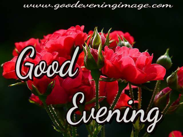 Good evening photos with rose