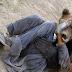 ΣΟΚ σε χωριό της Καστοριάς - Βοσκός βρέθηκε αντιμέτωπος με αρκούδες