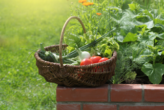 BEST VEGETABLES TO GROW IN YOUR BACKYARD