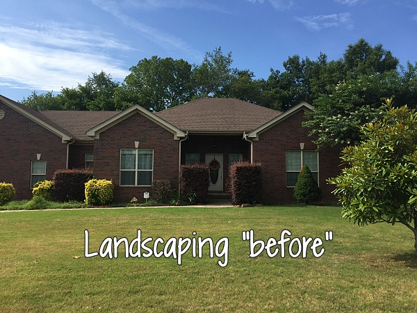 landscaping before removing shrubs and adding flowers