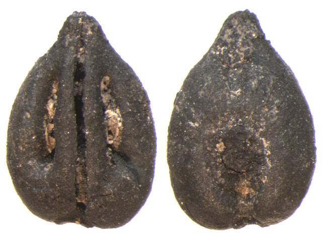 Fruit crops reached the Iberian Peninsula almost 3,000 years ago