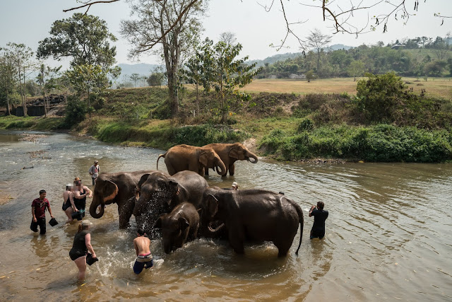 Tourists bathing elephants.