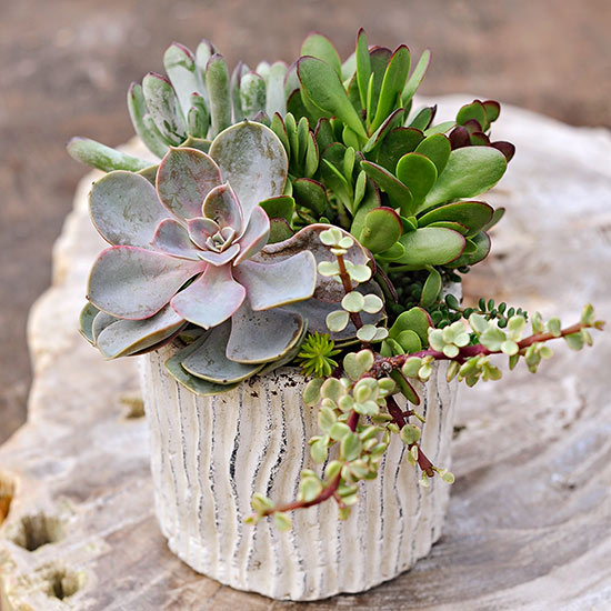 Awesome Succulent Ideas