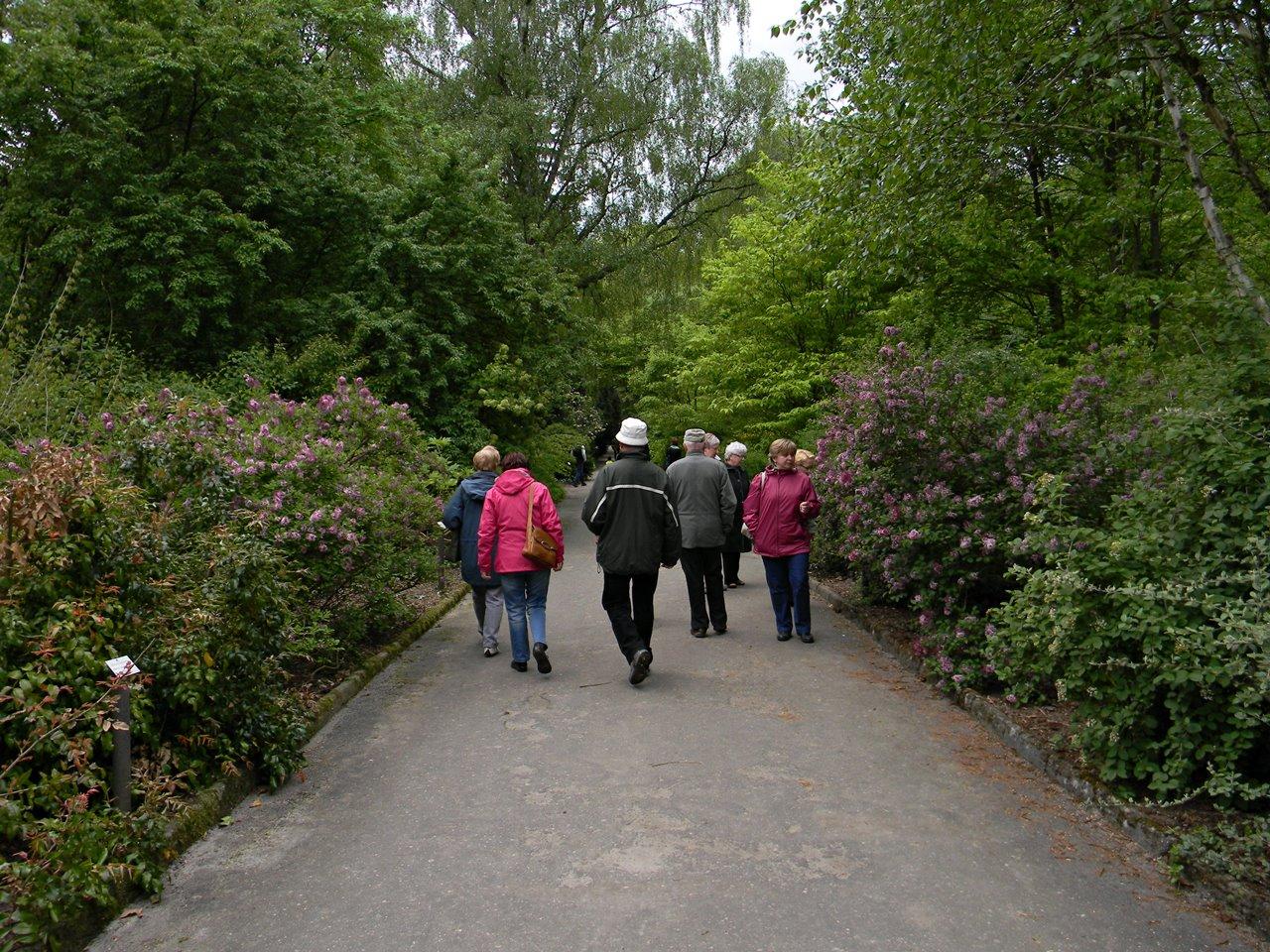 zwiedzanie arboretum w Kórniku, alejki