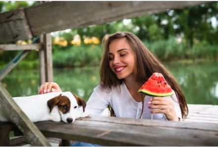 5 Essential Elements For Can dog eat watermelon