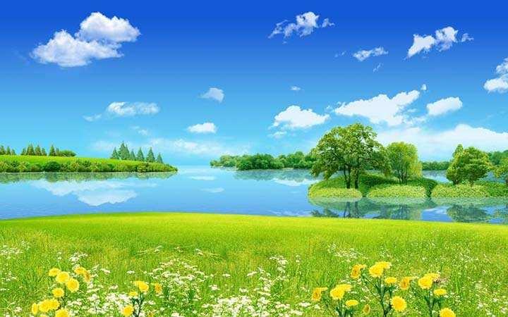 göl kenarı çiçek resimleri
