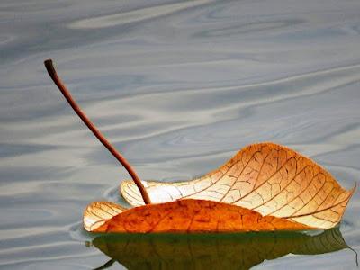 Leaf floating downstream