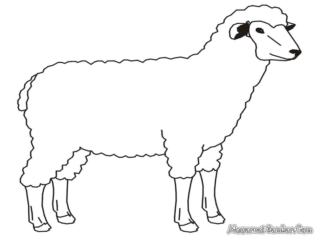 Gambar Kambing Domba Related Keywords & Suggestions