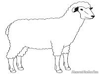 Mewarnai Gambar Domba Jantan
