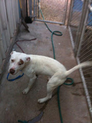 "4/16/12""Burns Flat Ok Shelter Tinker is slowly losing his spirit... in jail way to long,"