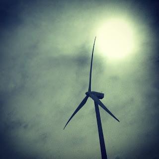 """Desde ese momento, los animales que  lograron sobrevivir a la hambruna y el  envenenamiento, murieron electrocutados  en cables de alta tensión o """"guillotinados""""  por las torres eólicas, también conocidas  como las """"matapájaros"""""""