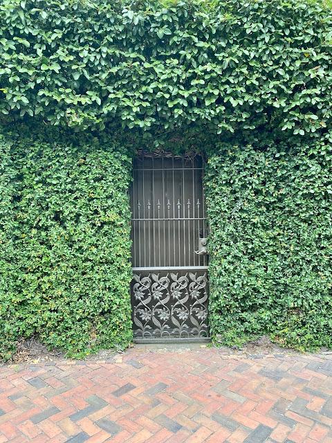travel blogger influencer savannah georgia green ivy wall