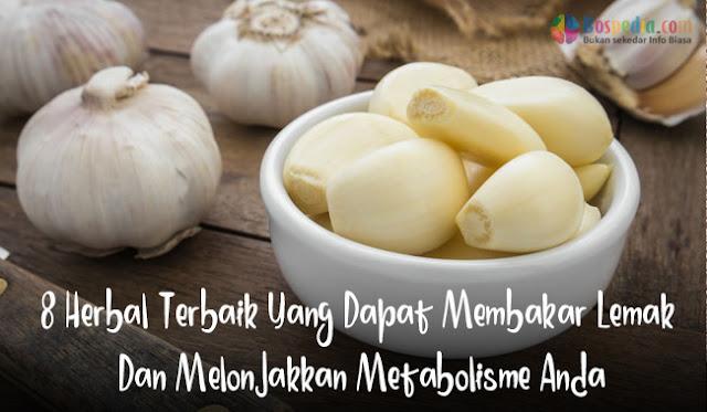 8 Herbal Terbaik Yang Dapat Membakar Lemak Dan Melonjakkan Metabolisme Anda