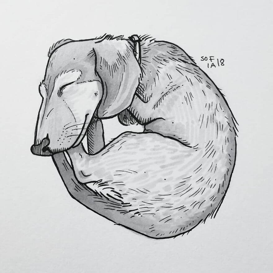 13-The-Tiniest- Dachshund-Sofia-Härö-Black-and-White-Ink-Animal-Drawings-www-designstack-co
