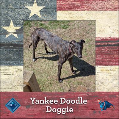 Yankee Doodle Dennis