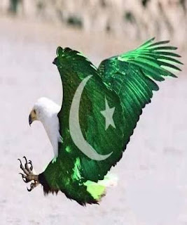 Pakistani Eagle