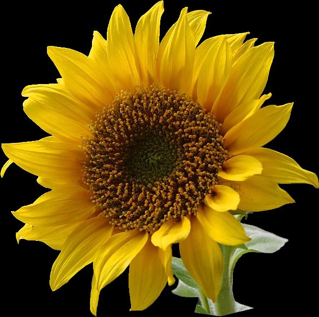 TATTOO SYMBOLISM: Flower Tattoo Symbolism