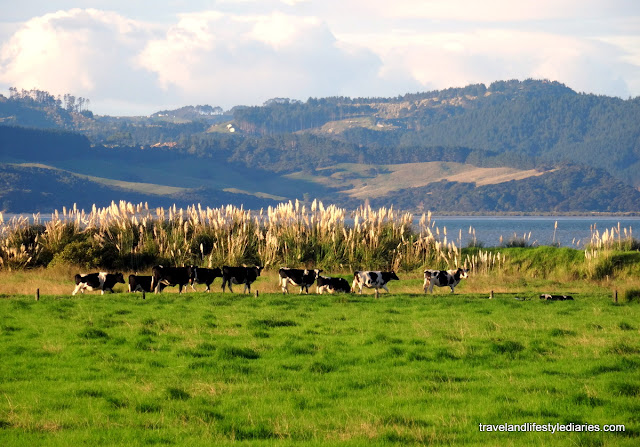 Auckland, New Zealand: Living in the countryside with nature