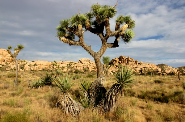 deserts animals and plants - photo #5