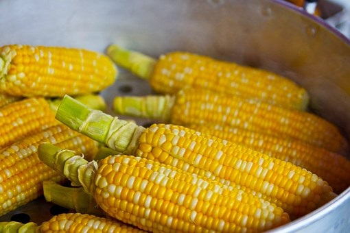 Maize | Definition, Types, History, Uses, Health Benefits And Amazing Facts