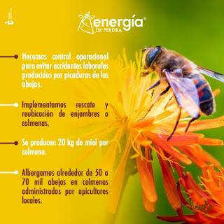 Mes del Medio Ambiente Energía de Pereira