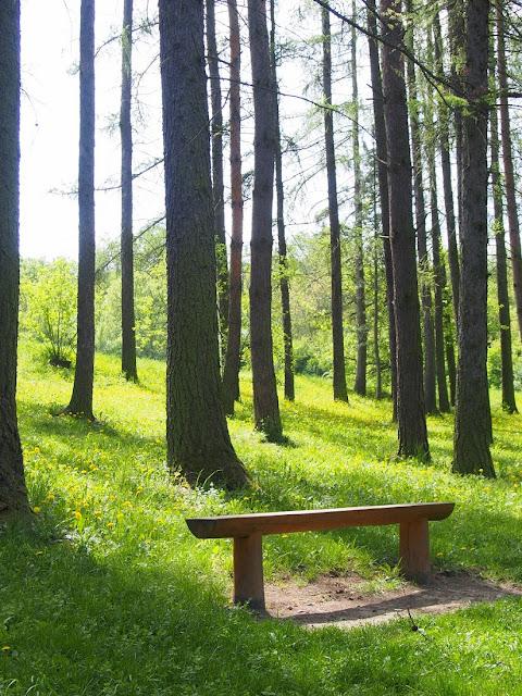 brnenska priehrada les