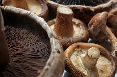 Mushroom demand in Hyderabad
