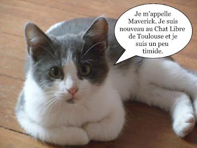 Un petit chaton gris et blanc